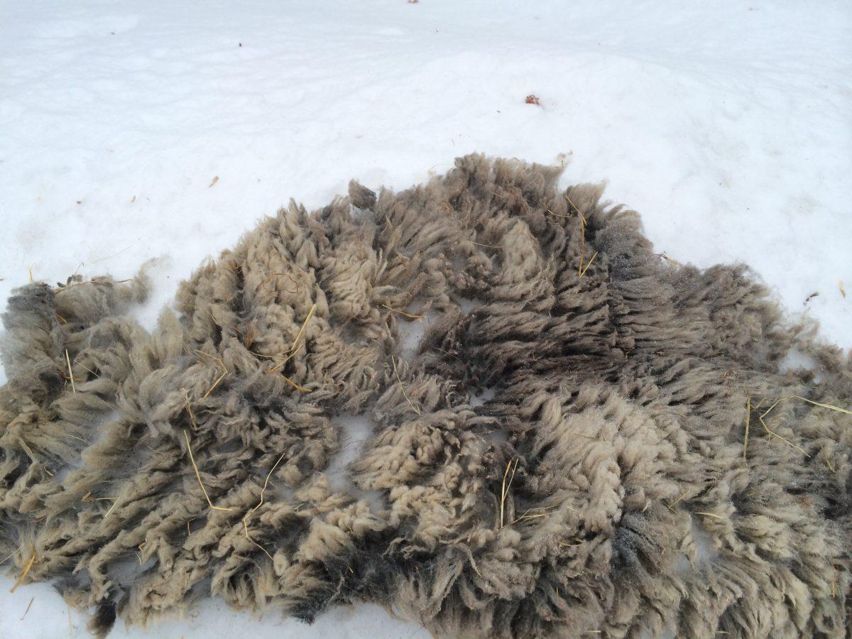 Saving Some Wool