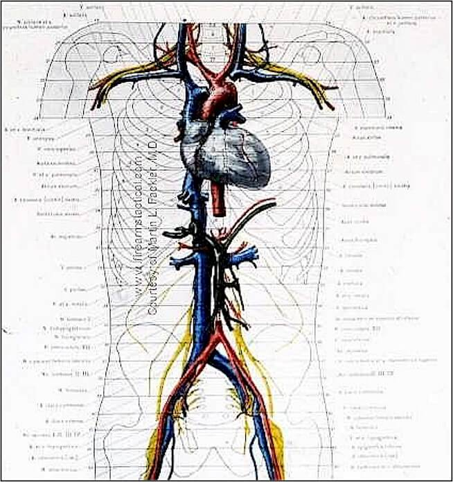 Cardiovascular Structures